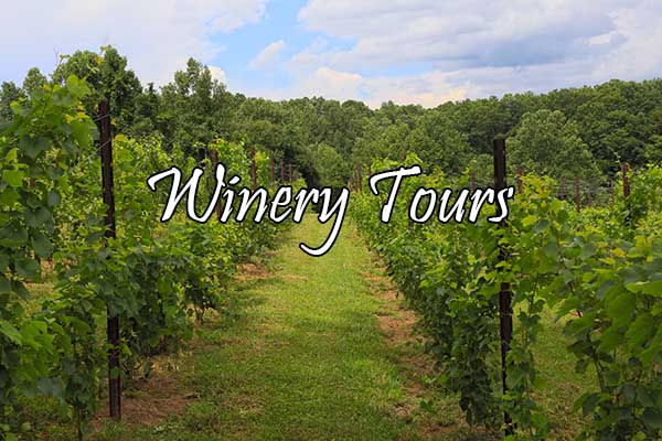 Winery Tours with The Van in Black