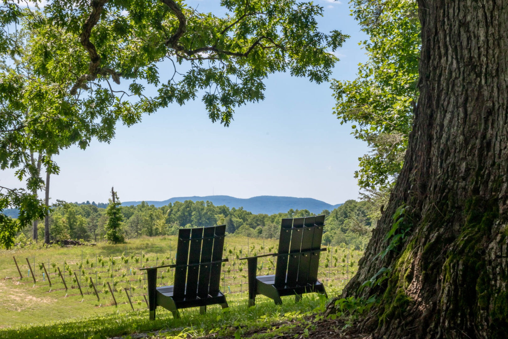 Marked Tree Vineyards