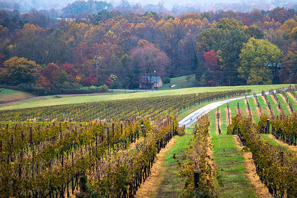 An Autumn Winery