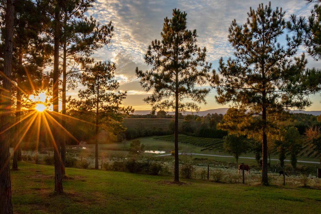 Parker-Binns Sunset