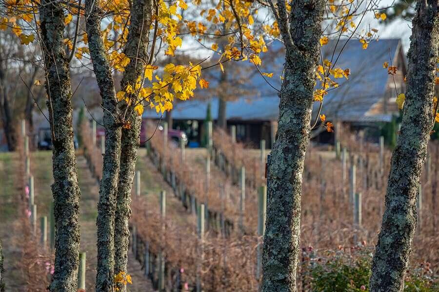 Overmountain Vineyards Autumn