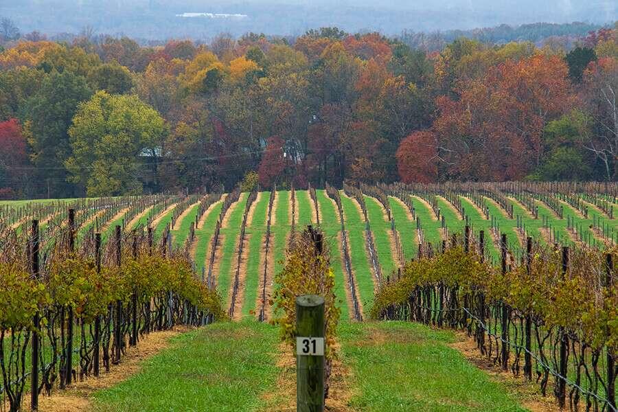 Carolina Winery Autumn